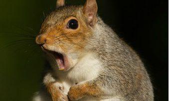 cropped-squirrel.jpg