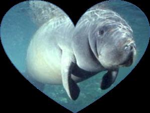 heart manatee