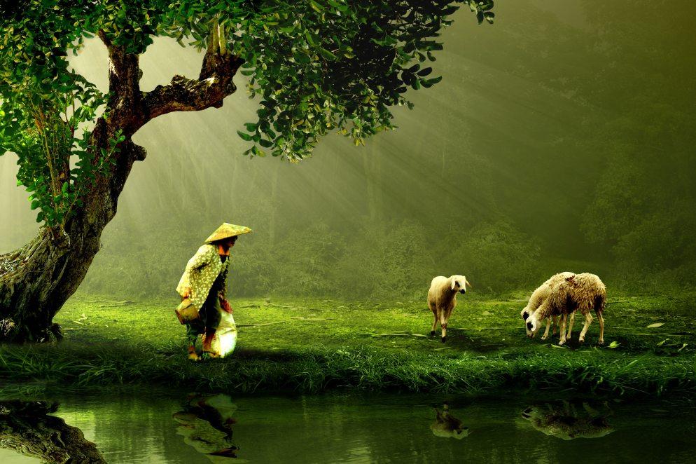 animals-elderly-forest-40873