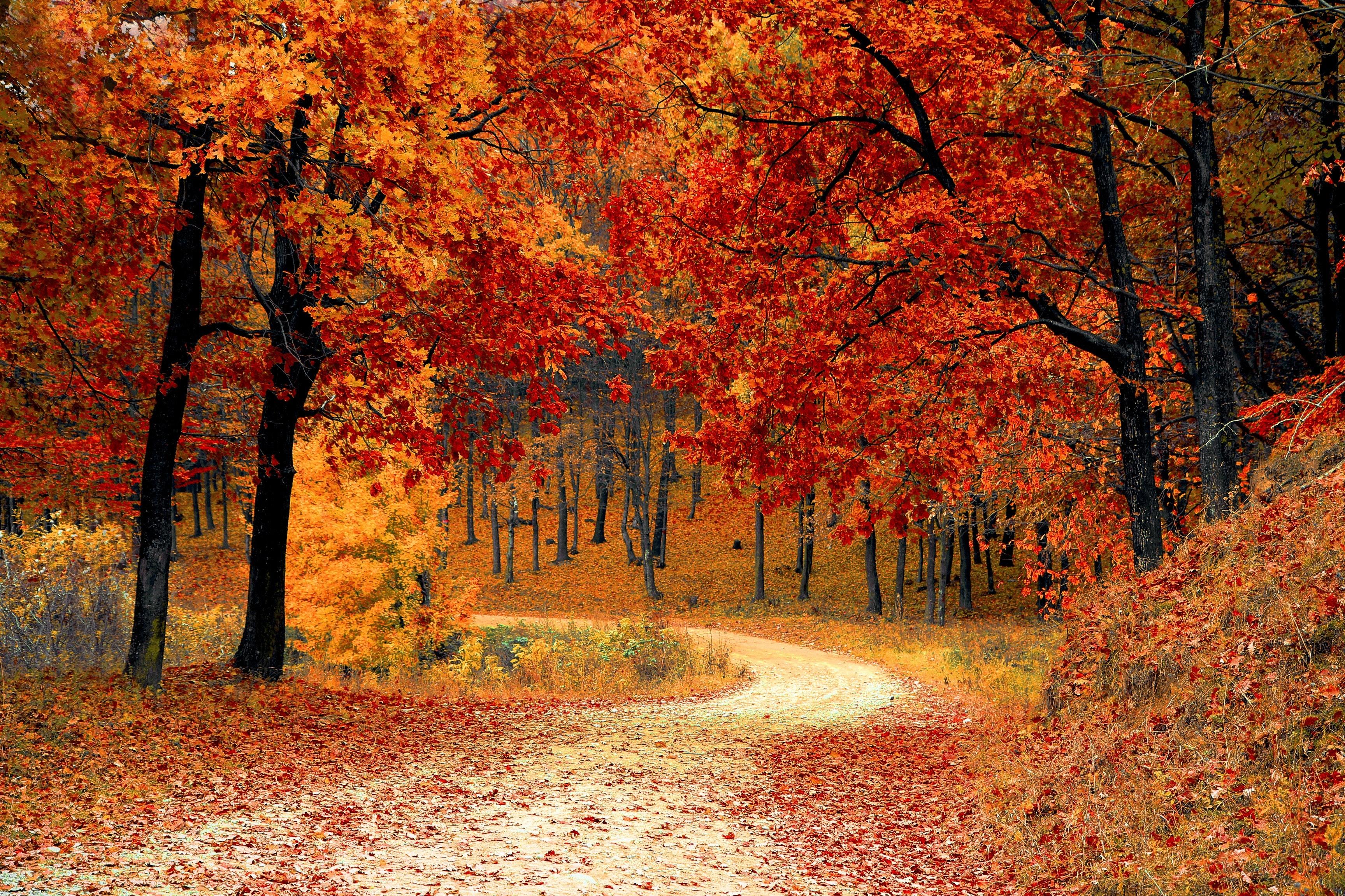 autumn-colorful-colourful-33109