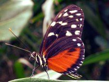 animal-antenna-beautiful-425244