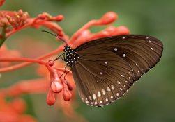 animal-bug-butterfly-53957
