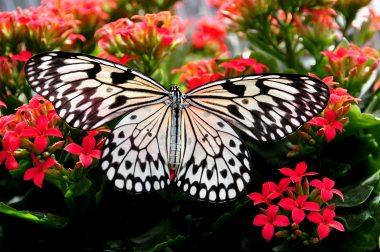 beautiful-bloom-blooming-268432