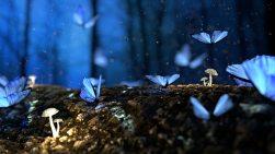 beautiful-blur-bright-326055