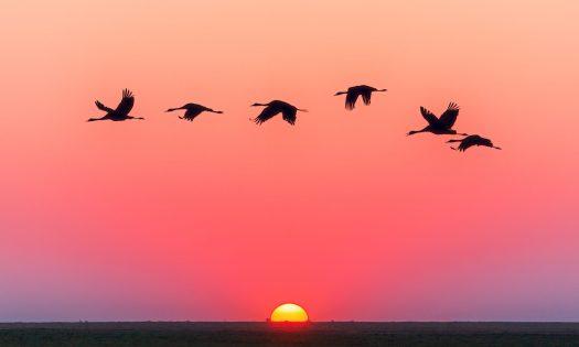 cropped-animals-backlit-dawn-1126384.jpg