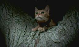 CATS 11